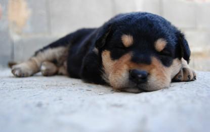 ¿Los perros sueñan?, ¿y los gatos? Conoce el sueño de tus mascotas