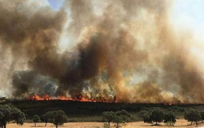 Piedrabuena: Extinguido el incendio que ha quemado más de 150 hectáreas