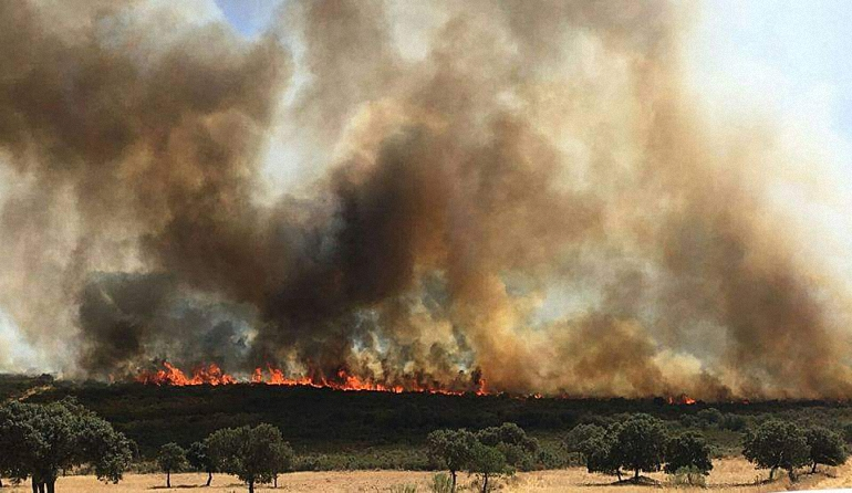Piedrabuena Extinguido el incendio que ha quemado más de 150 hectáreas