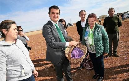 La Junta promocionará los alimentos sujetos a denominaciones de origen e indicaciones geográficas protegidas con 2,6 millones de euros durante el 2018
