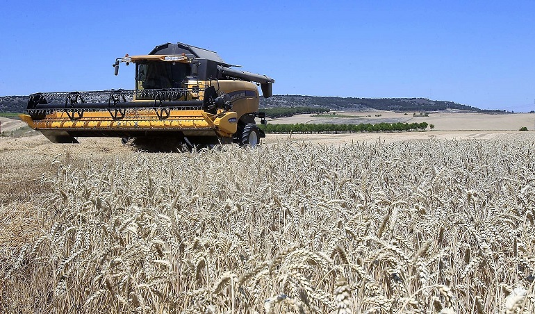 15-07-2014 presentación de la campaña de cereales en villamuriel provincia de palencia,   foto ANTONIO QUINTERO