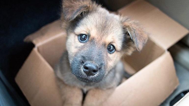 Regalar mascotas o cortarle el rabo a los perros estará prohibido en España a partir de hoy