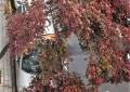 Ciudad Real con 35,8 litros ha sido este jueves la localidad con mayor precipitaciones acumuladas a nivel nacional