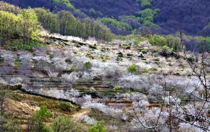 Balance de las cabañuelas en España: abundantes lluvias y nieve en el sur