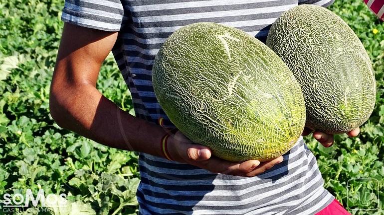 Los precios del melón y de la sandía rozan el umbral de la rentabilidad para los agricultores