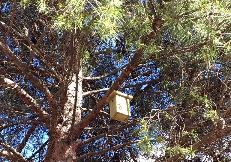 Ciudad Real Medio Ambiente lleva a cabo el programa de control de la procesionaria del pino