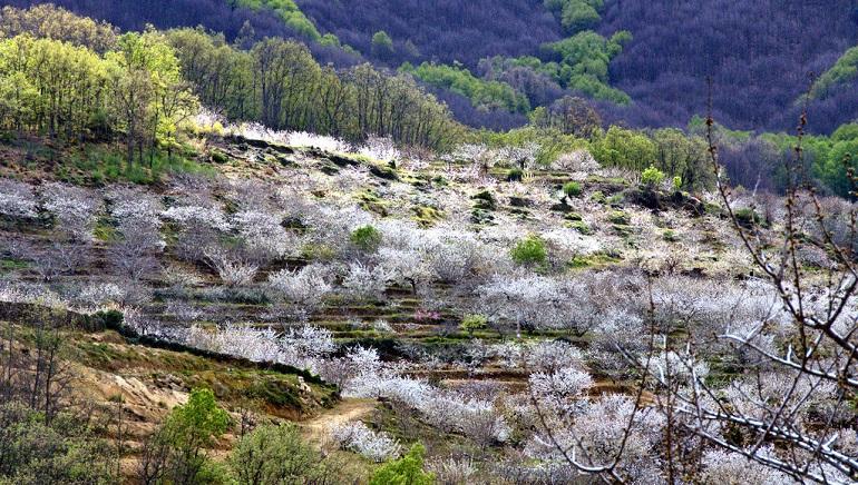 Balance de las cabañuelas en España abundantes lluvias y nieve en el sur