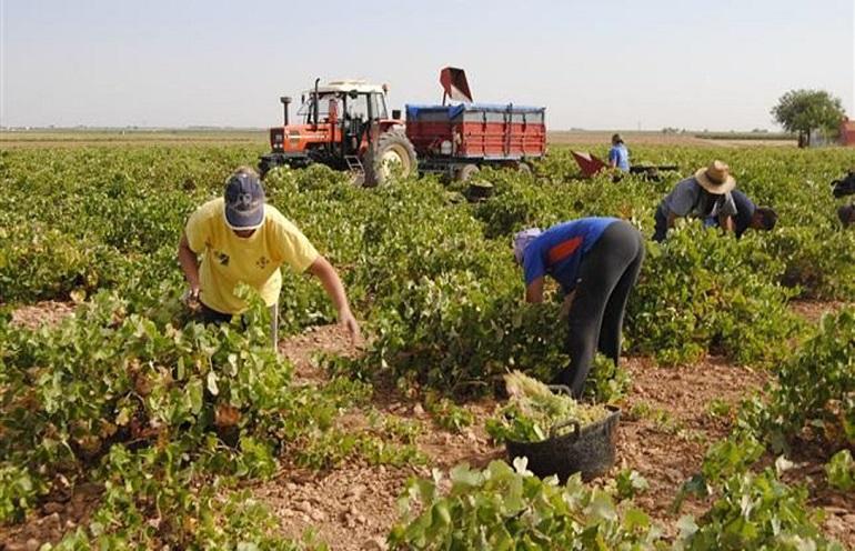 El convenio del campo de la provincia de Ciudad Real contempla subidas salariares del 2 por ciento hasta el año 2020