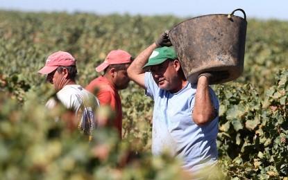 """UGT Pide """"tolerancia cero"""" con los empresarios del campo """"que incumplan las condiciones laborales de la vendimia"""""""
