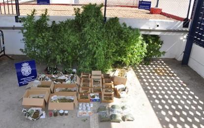 Desmanteladas dos plantaciones ilegales de marihuana en la Poblachuela y Fuente el Fresno