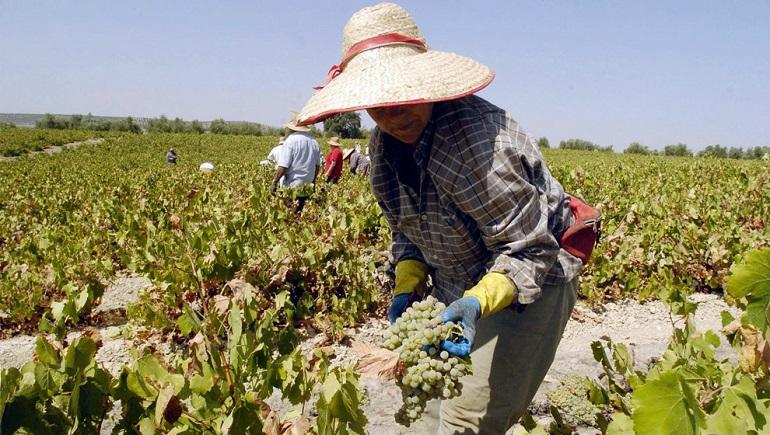 ASAJA pide a los ayuntamientos incrementar los albergues para la vendimia de cara a evitar el coronavirus