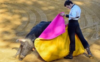 Ciudad Real: Los antitaurinos piden que se anulen los eventos programados en Valdepeñas y Manzanares