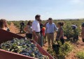 VOX registra una Proposición No de Ley en el Congreso para salvar al sector del vino